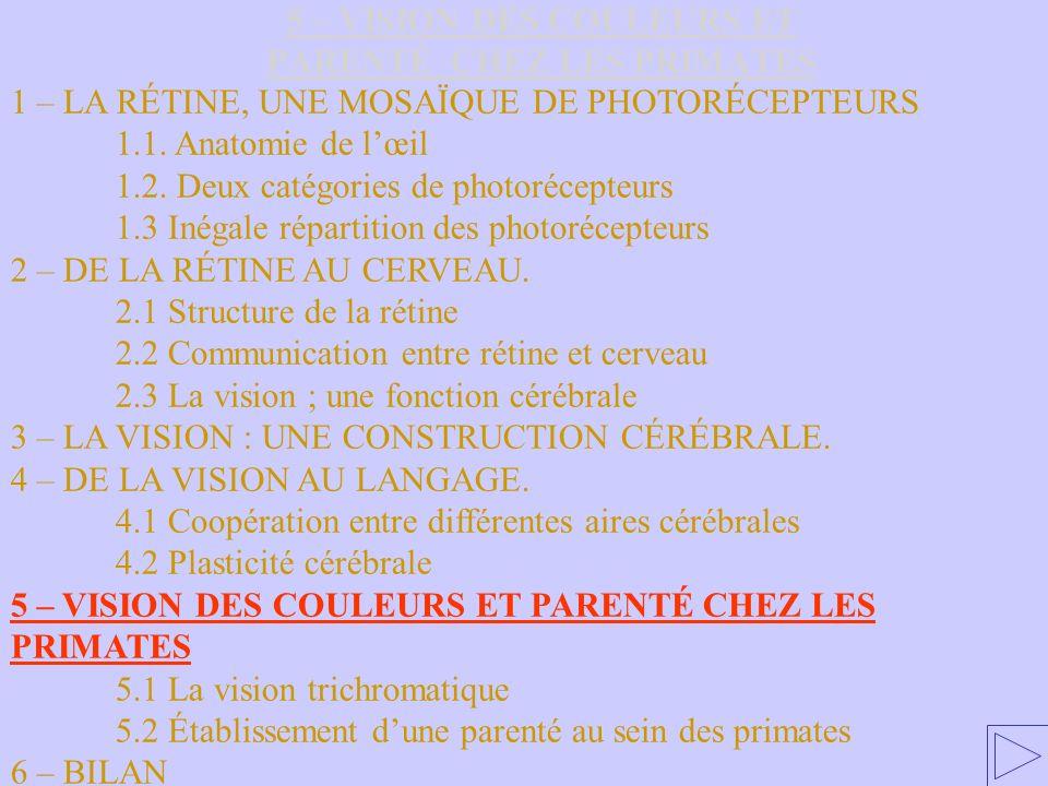 5 – VISION DES COULEURS ET PARENTÉ CHEZ LES PRIMATES