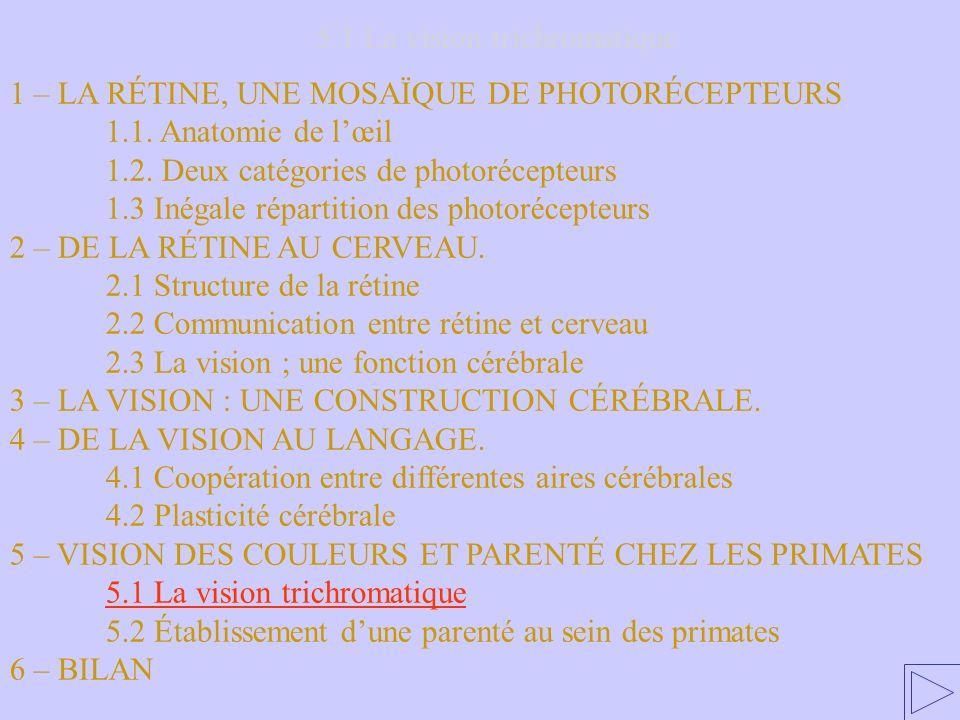 5.1 La vision trichromatique