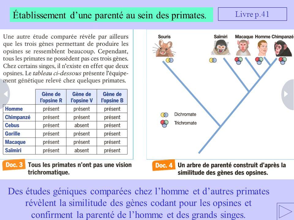 Établissement d'une parenté au sein des primates.