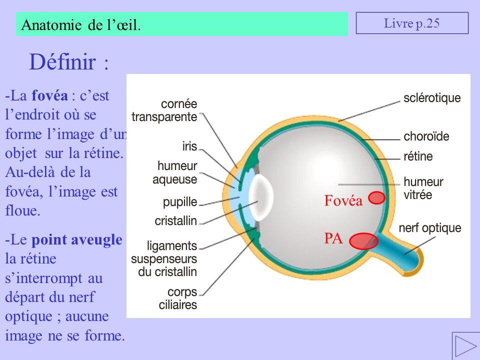 Définir : Anatomie de l'œil.