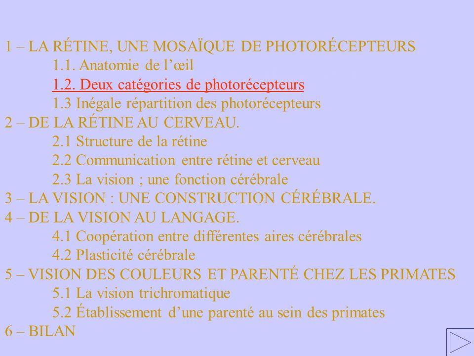 1.2. Deux catégories de photorécepteurs