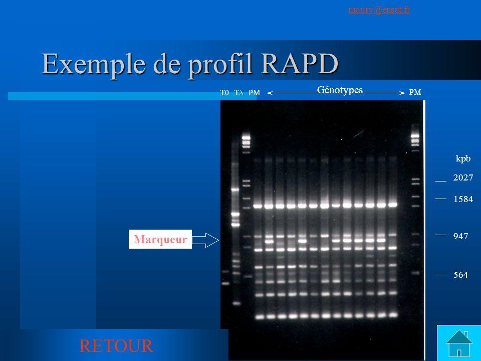 Exemple de profil RAPD RETOUR Marqueur Génotypes kpb 2027 1584 947 564