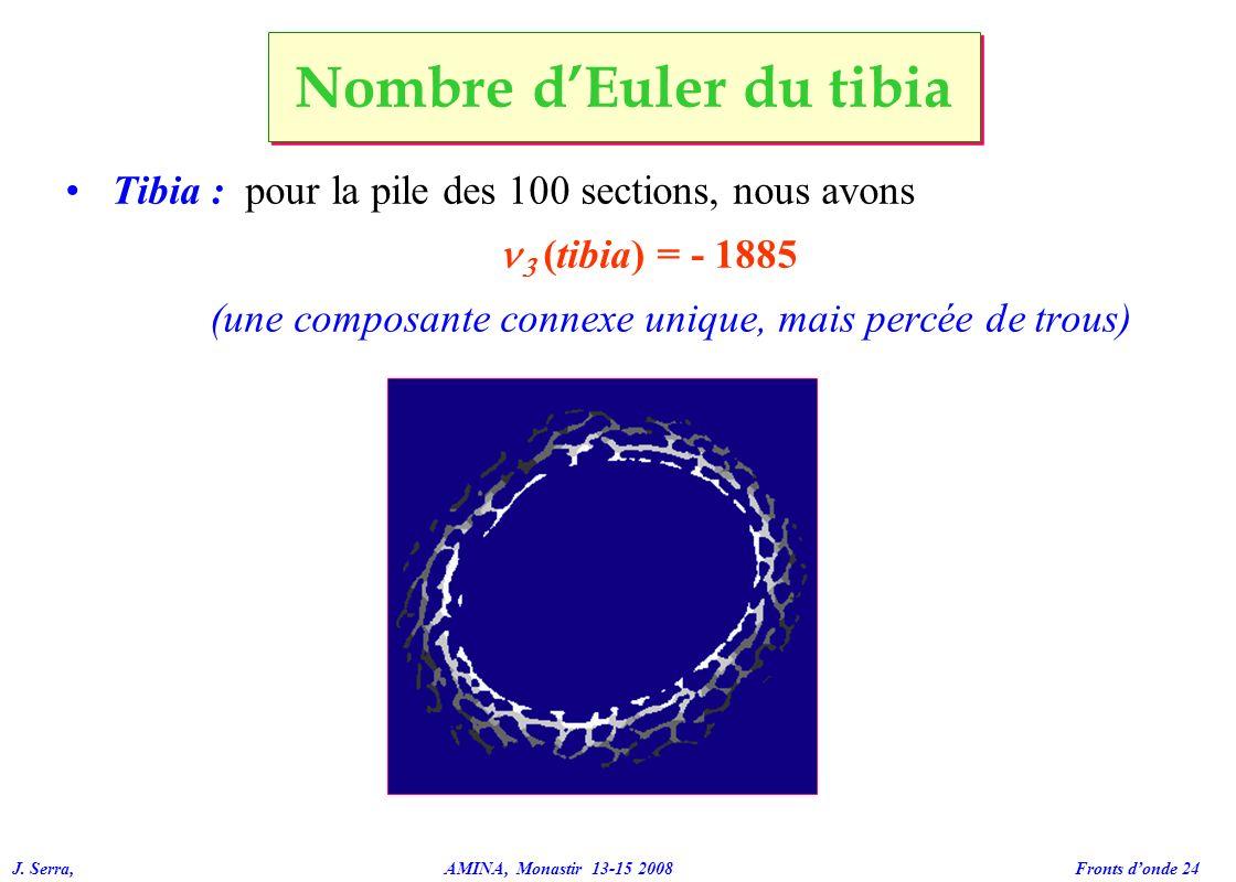 Nombre d'Euler du tibia