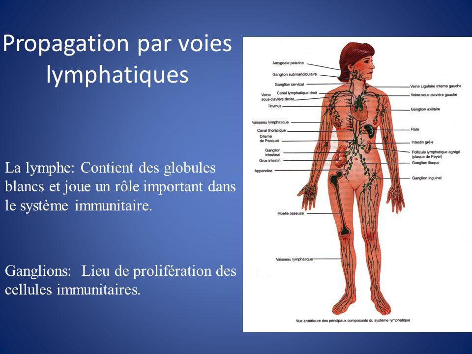 Propagation par voies lymphatiques