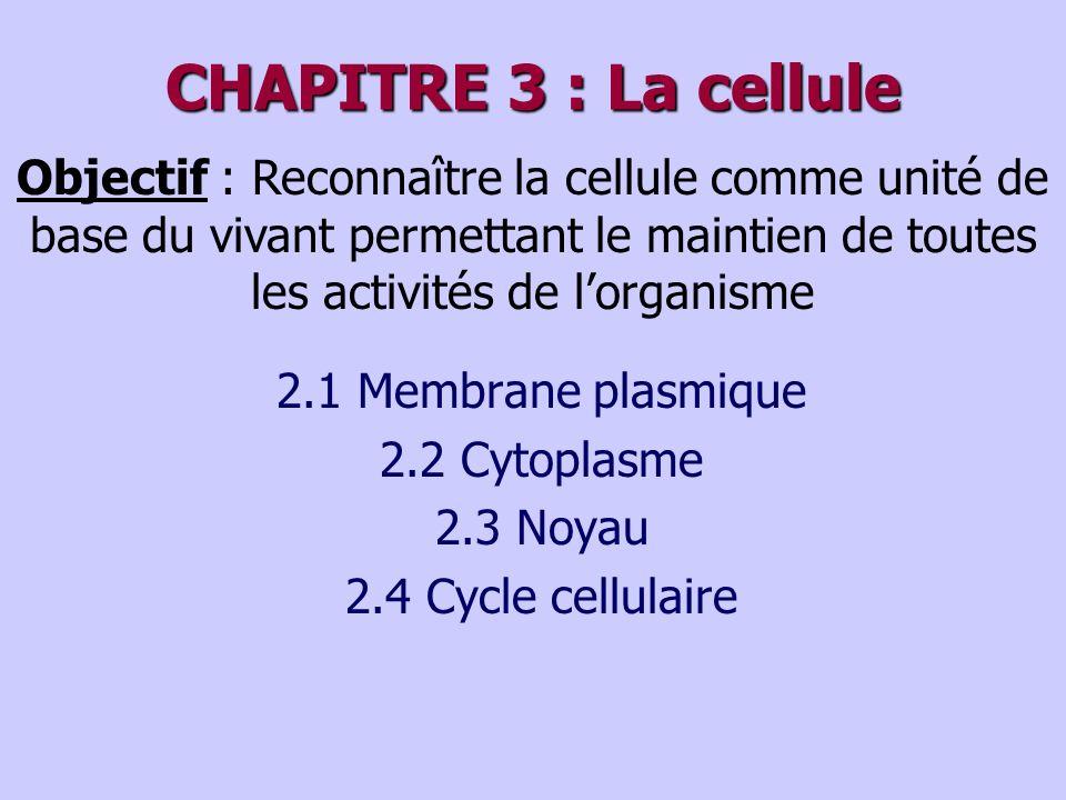CHAPITRE 3 : La cellule Objectif : Reconnaître la cellule comme unité de base du vivant permettant le maintien de toutes les activités de l'organisme.
