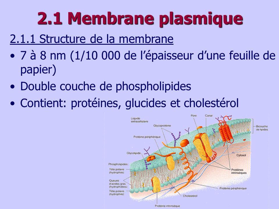 2.1 Membrane plasmique 2.1.1 Structure de la membrane