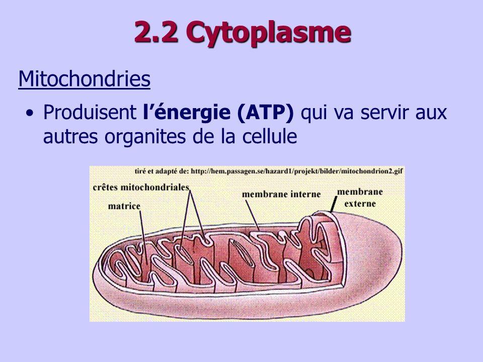 2.2 Cytoplasme Mitochondries