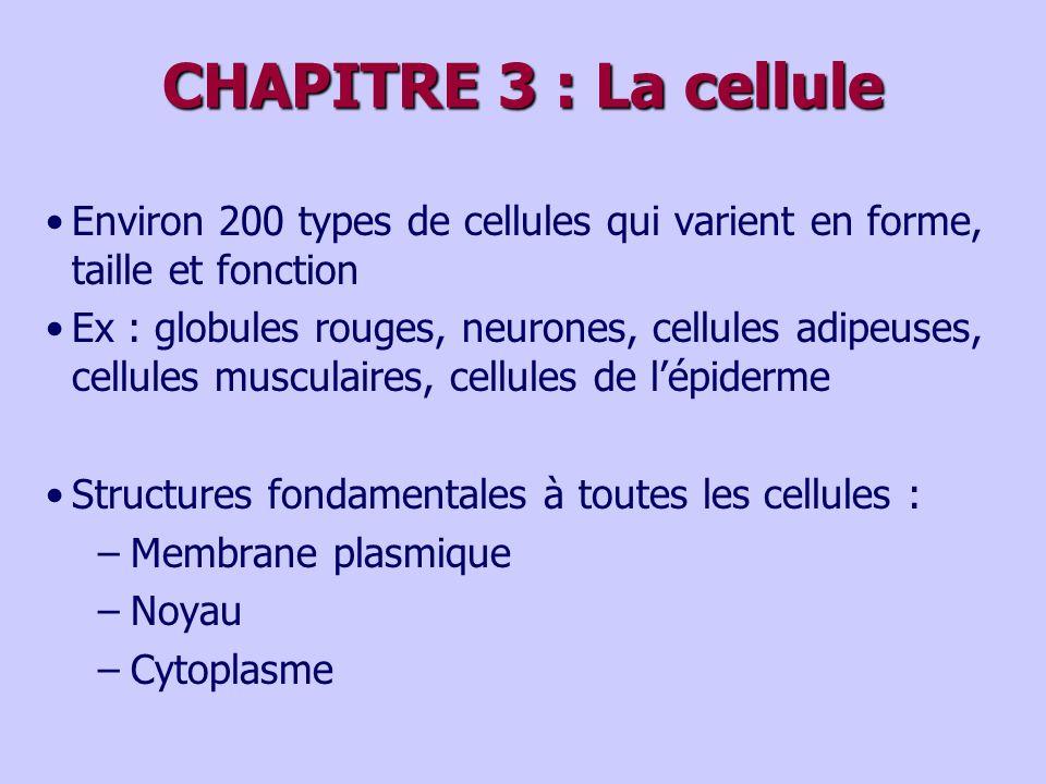 CHAPITRE 3 : La cellule Environ 200 types de cellules qui varient en forme, taille et fonction.