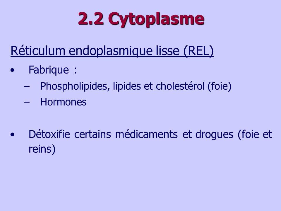 2.2 Cytoplasme Réticulum endoplasmique lisse (REL) Fabrique :