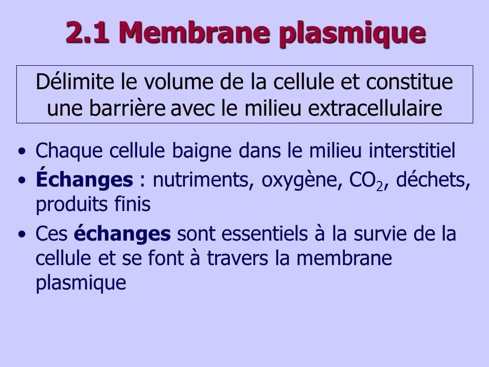2.1 Membrane plasmique Délimite le volume de la cellule et constitue une barrière avec le milieu extracellulaire.