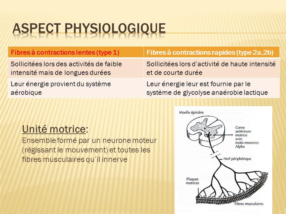 Aspect physiologique Unité motrice:
