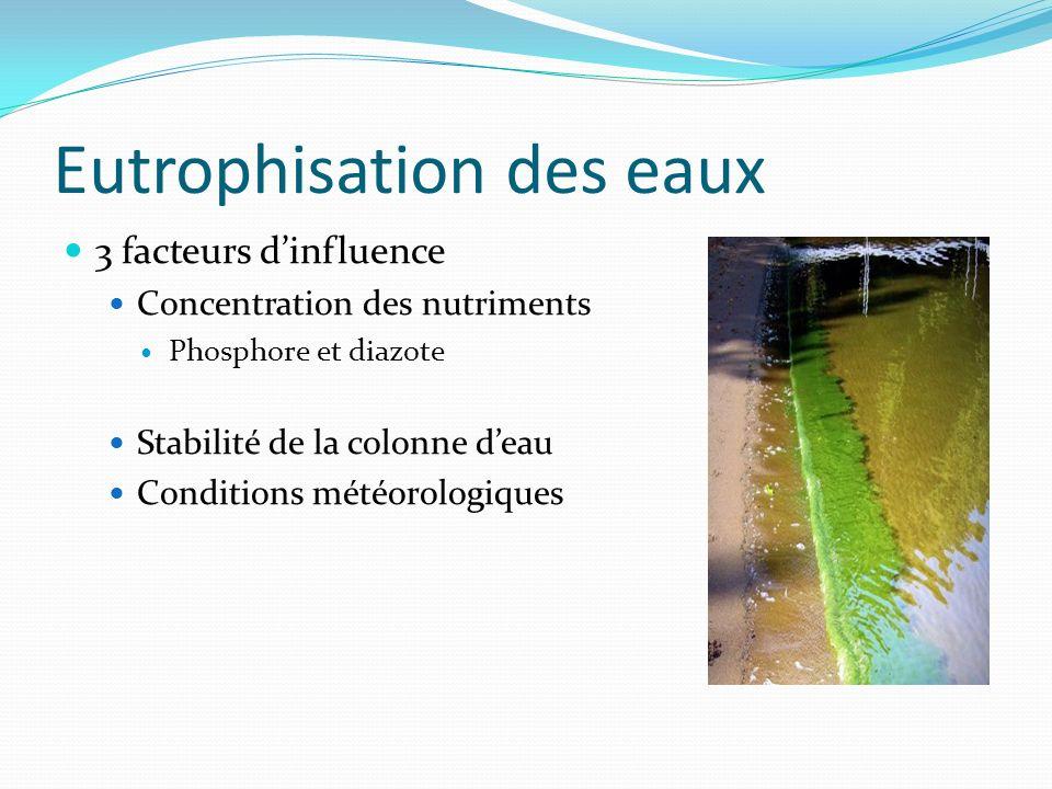 Eutrophisation des eaux