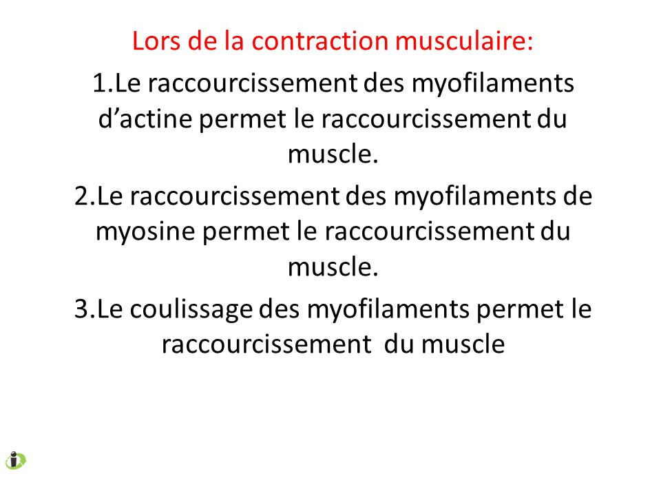 Lors de la contraction musculaire: