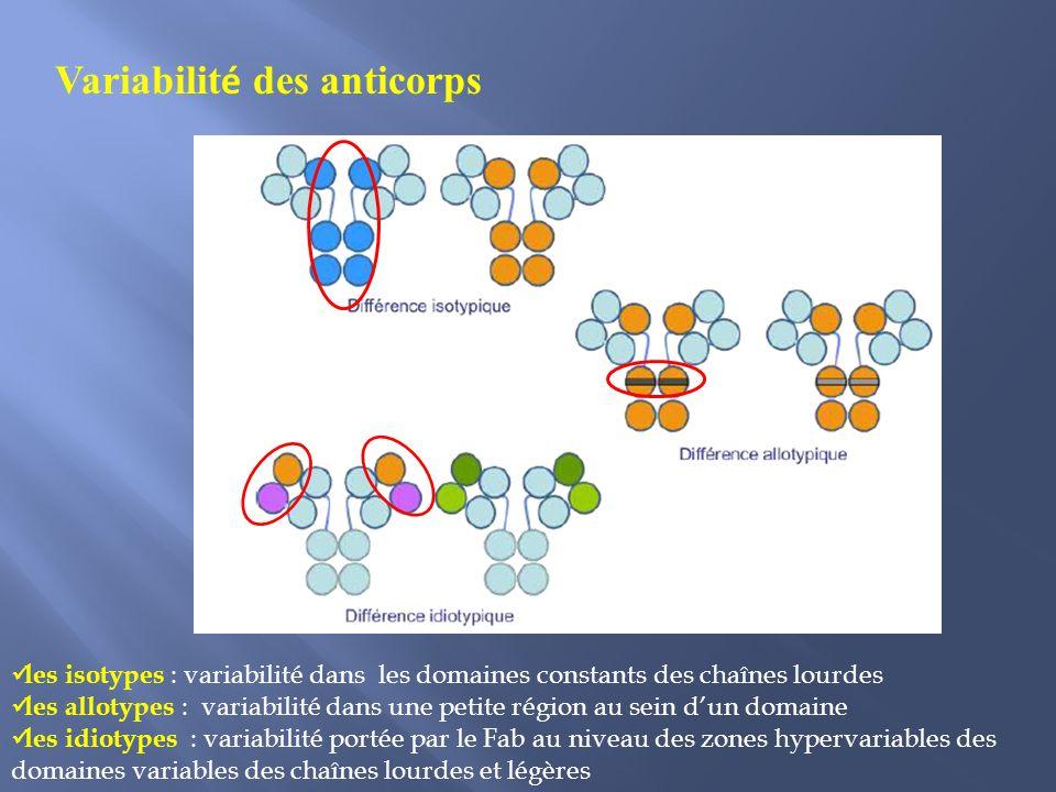 Variabilité des anticorps