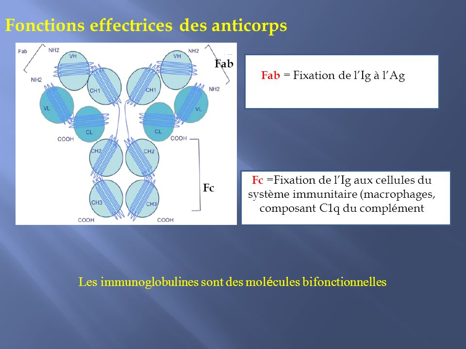 Fonctions effectrices des anticorps