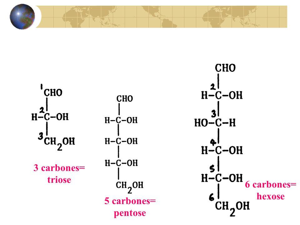 3 carbones= triose 6 carbones= hexose 5 carbones= pentose