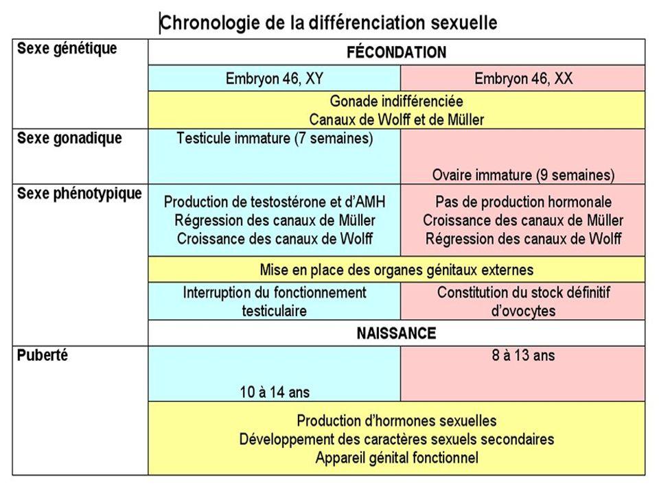 Chronologie de la différenciation sexuelle Les principales étapes de la différenciation sexuelle sont identiques dans les deux sexes mais elles sont parfois décalées dans le temps.