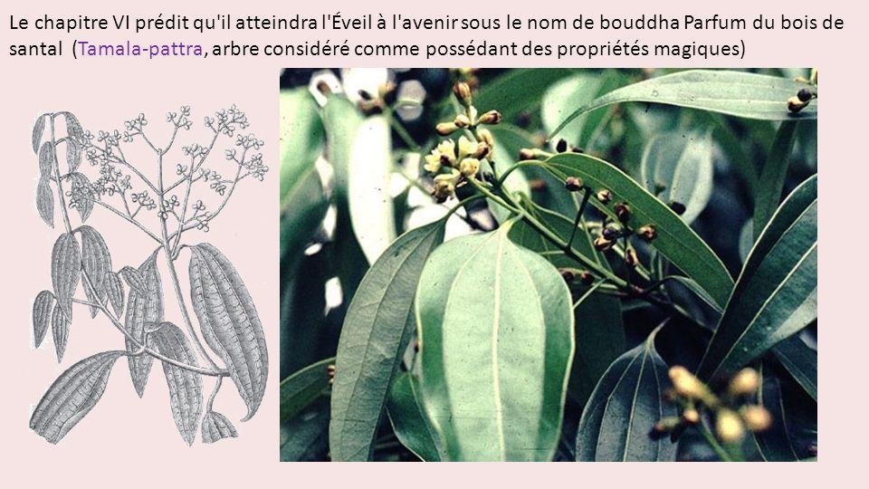 Le chapitre VI prédit qu il atteindra l Éveil à l avenir sous le nom de bouddha Parfum du bois de santal (Tamala-pattra, arbre considéré comme possédant des propriétés magiques)