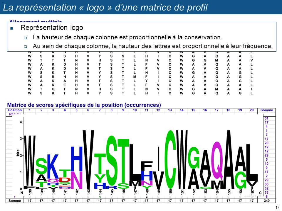 La représentation « logo » d'une matrice de profil