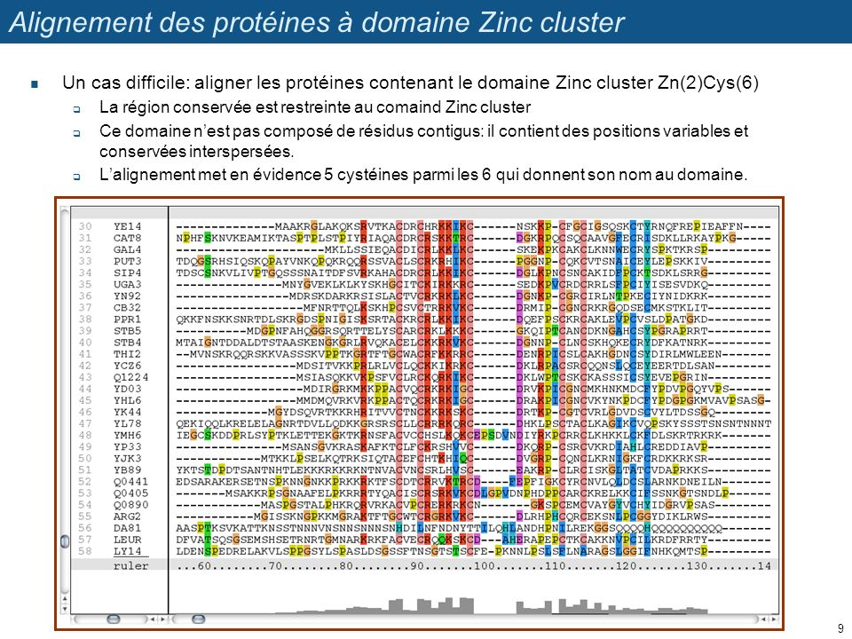 Alignement des protéines à domaine Zinc cluster