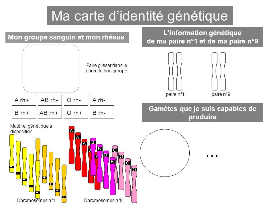 Ma carte d'identité génétique