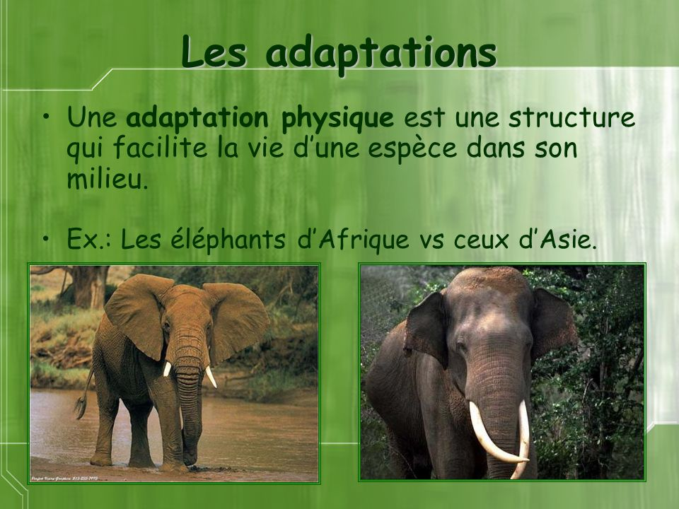Les adaptations Une adaptation physique est une structure qui facilite la vie d'une espèce dans son milieu.