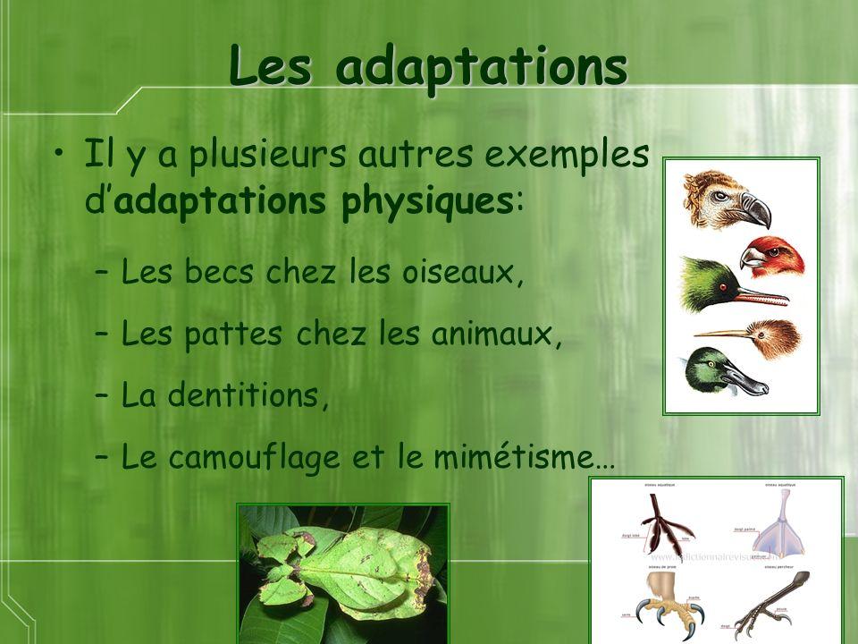 Les adaptations Il y a plusieurs autres exemples d'adaptations physiques: Les becs chez les oiseaux,