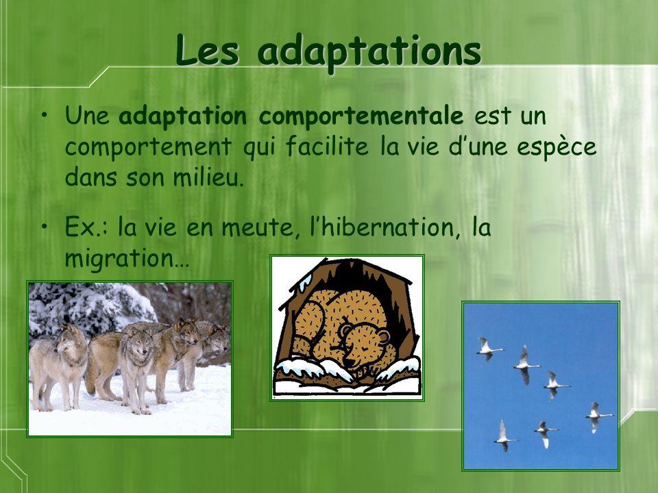 Les adaptations Une adaptation comportementale est un comportement qui facilite la vie d'une espèce dans son milieu.
