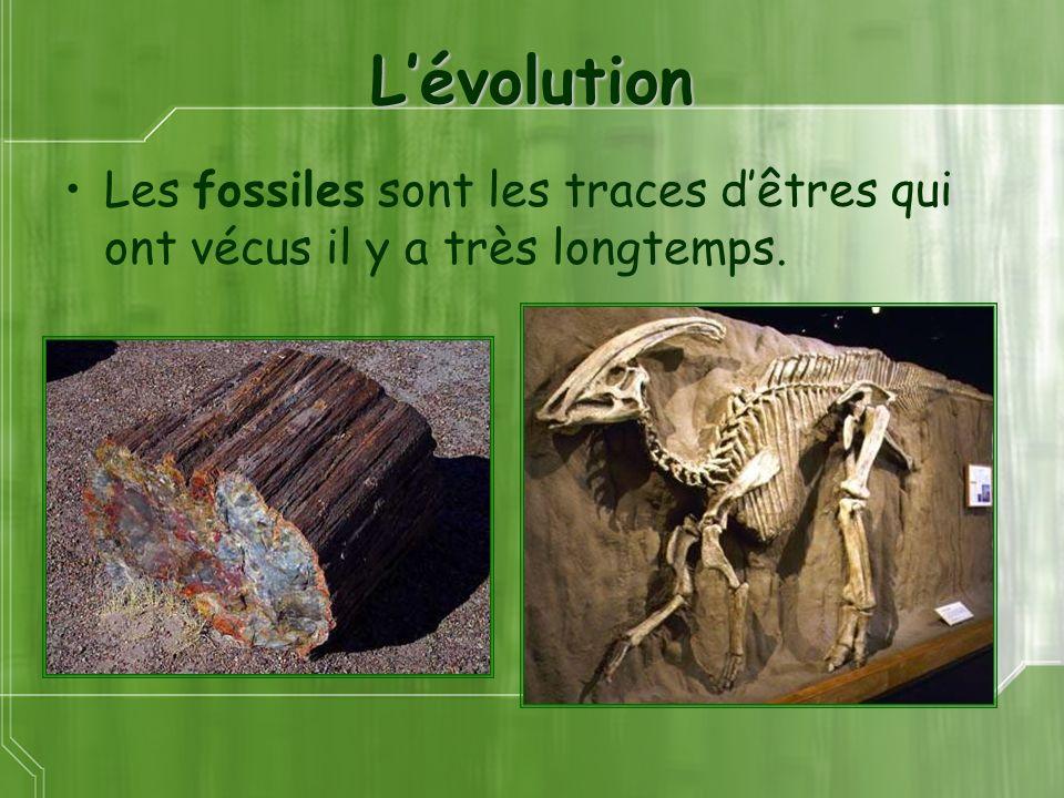 L'évolution Les fossiles sont les traces d'êtres qui ont vécus il y a très longtemps.