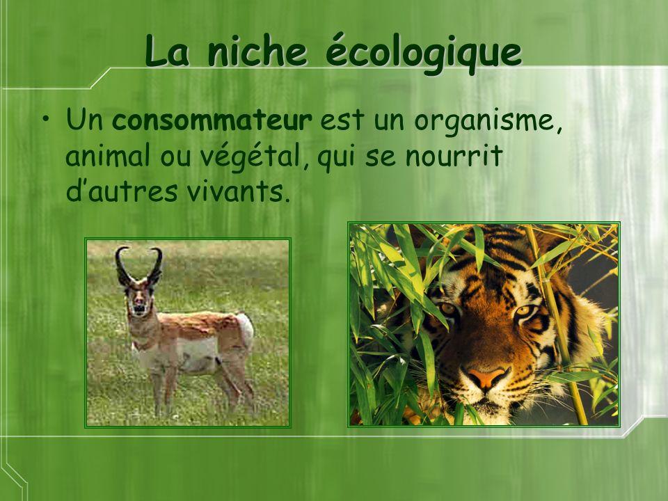 La niche écologique Un consommateur est un organisme, animal ou végétal, qui se nourrit d'autres vivants.