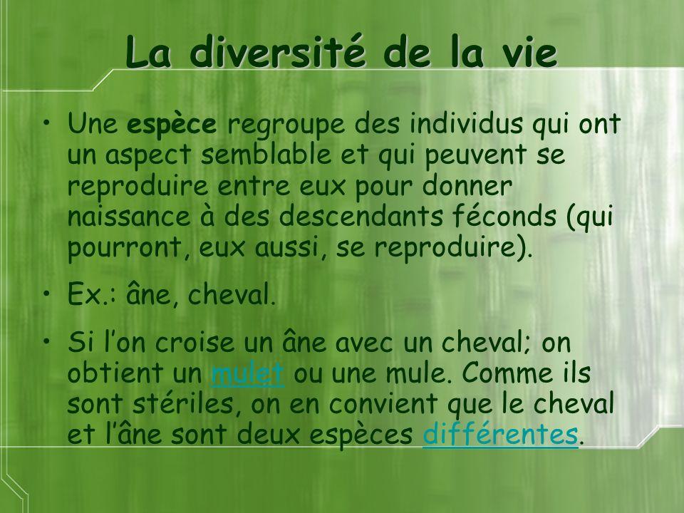 La diversité de la vie