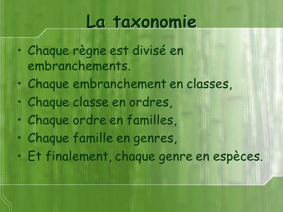 La taxonomie Chaque règne est divisé en embranchements.
