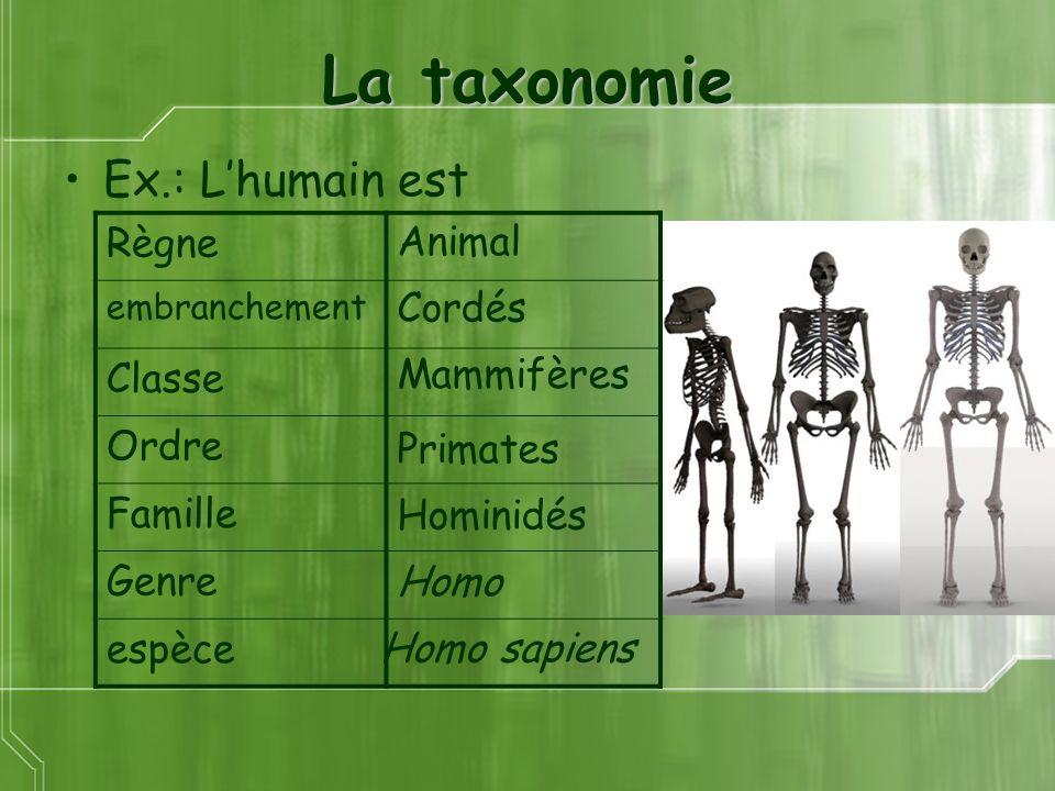 La taxonomie Ex.: L'humain est Règne Classe Ordre Animal Famille Genre