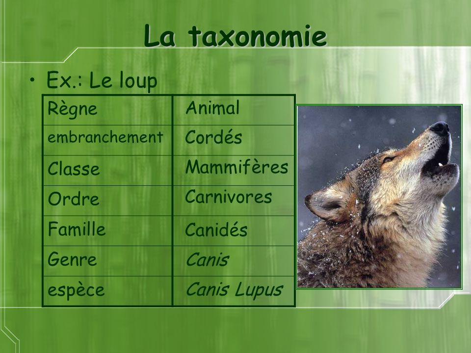 La taxonomie Ex.: Le loup Règne Classe Ordre Animal Famille Genre