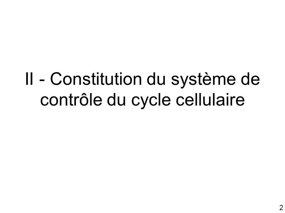 II - Constitution du système de contrôle du cycle cellulaire