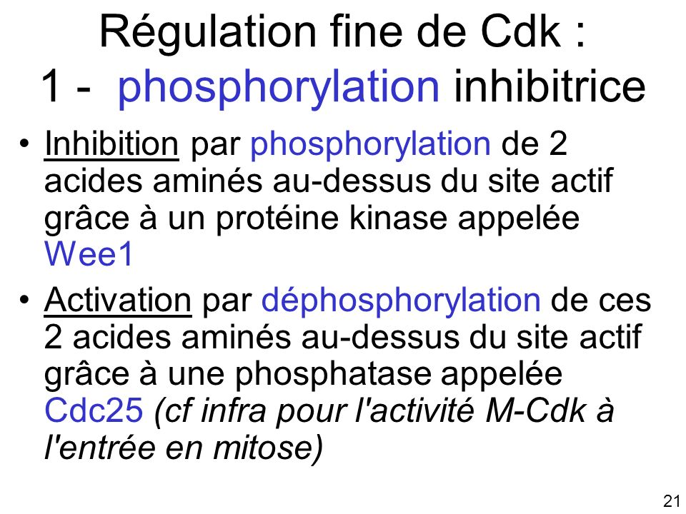 Régulation fine de Cdk : 1 - phosphorylation inhibitrice