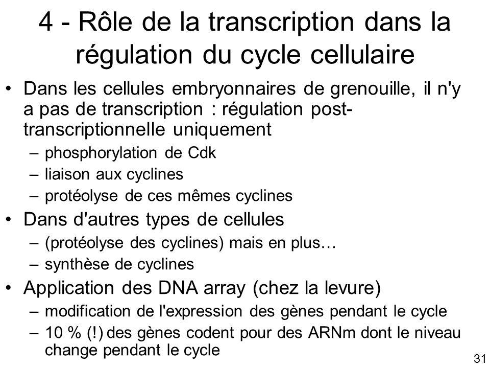 4 - Rôle de la transcription dans la régulation du cycle cellulaire