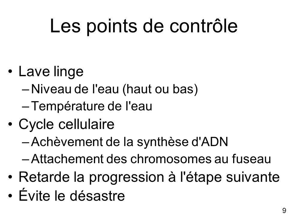 Les points de contrôle Lave linge Cycle cellulaire