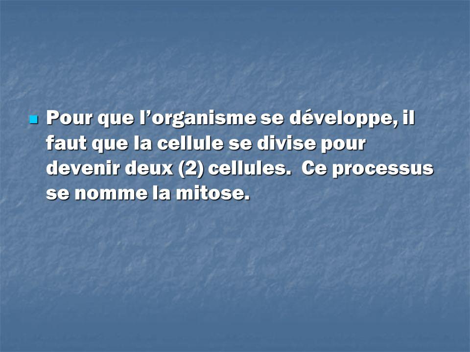 Pour que l'organisme se développe, il faut que la cellule se divise pour devenir deux (2) cellules.