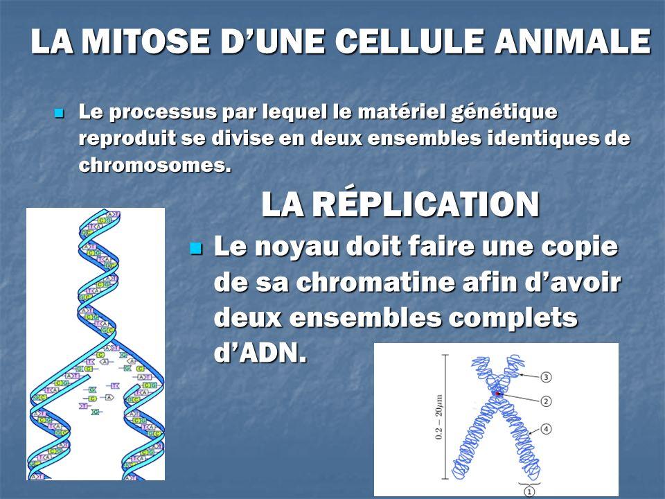 LA MITOSE D'UNE CELLULE ANIMALE