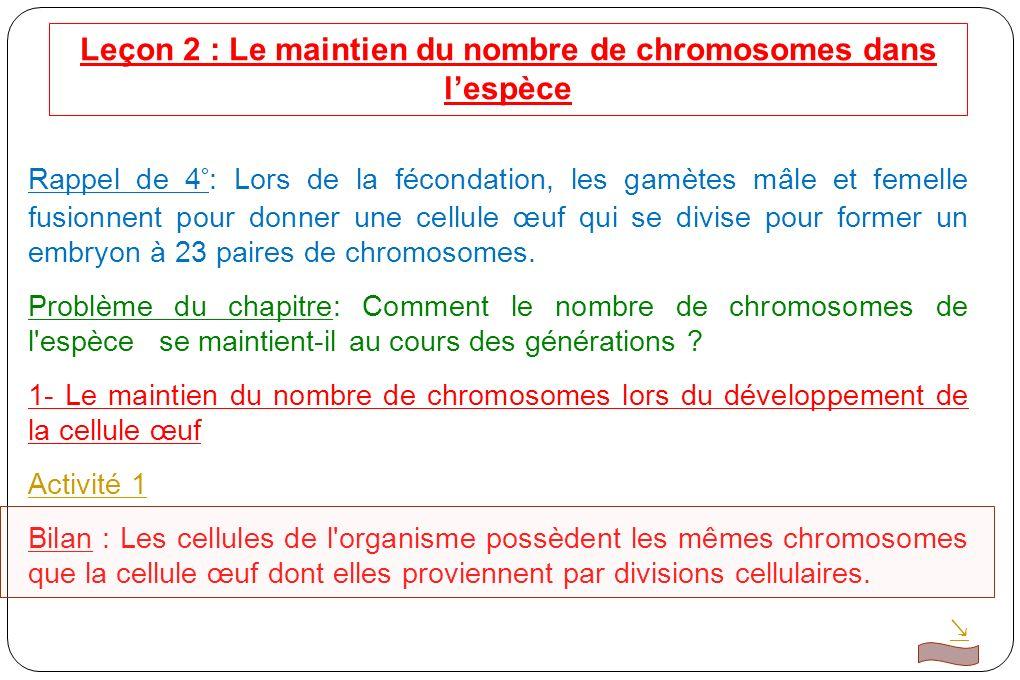 Leçon 2 : Le maintien du nombre de chromosomes dans l'espèce