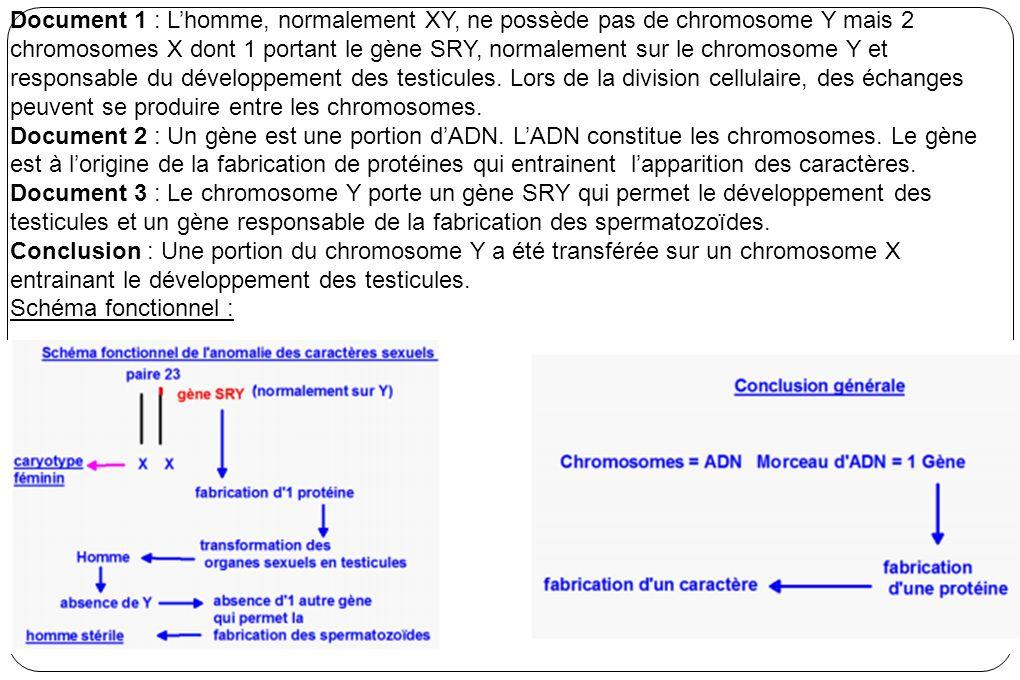 Document 1 : L'homme, normalement XY, ne possède pas de chromosome Y mais 2 chromosomes X dont 1 portant le gène SRY, normalement sur le chromosome Y et responsable du développement des testicules. Lors de la division cellulaire, des échanges peuvent se produire entre les chromosomes.