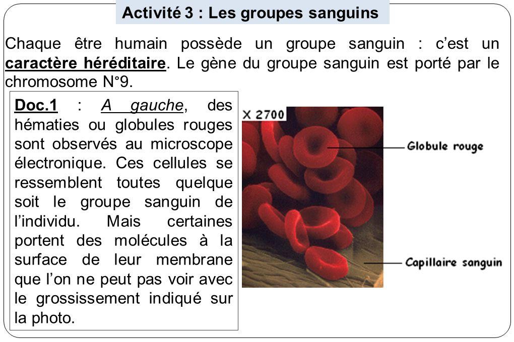 Activité 3 : Les groupes sanguins