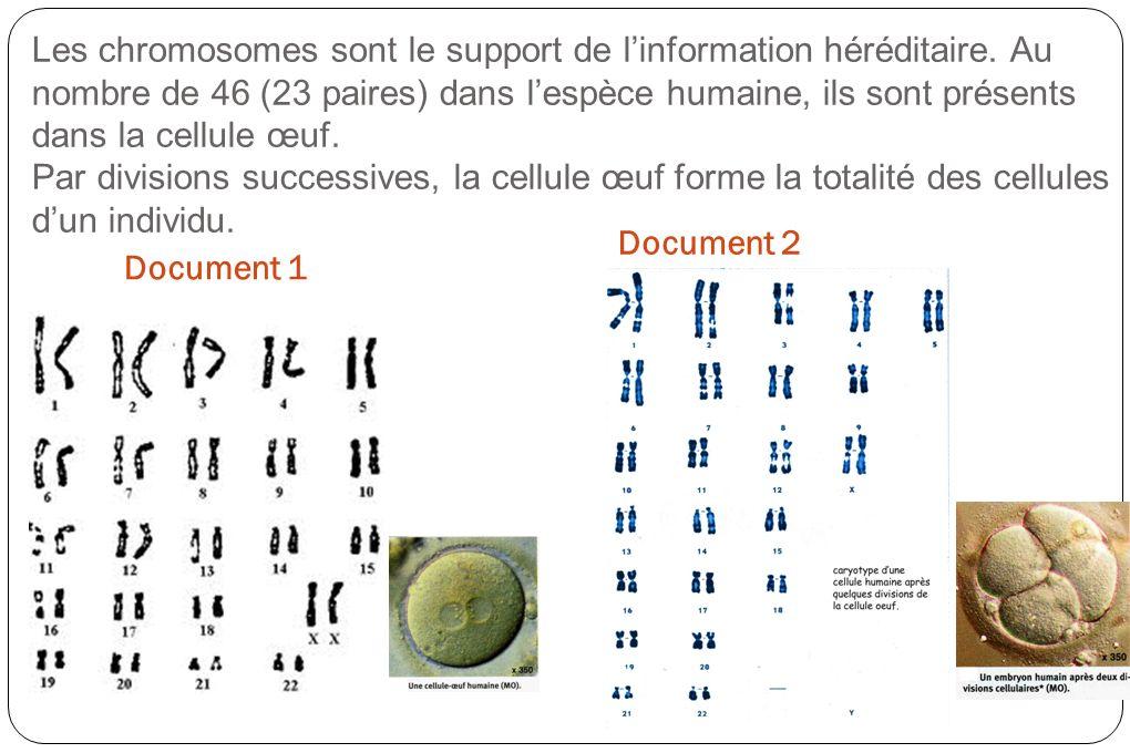 Les chromosomes sont le support de l'information héréditaire