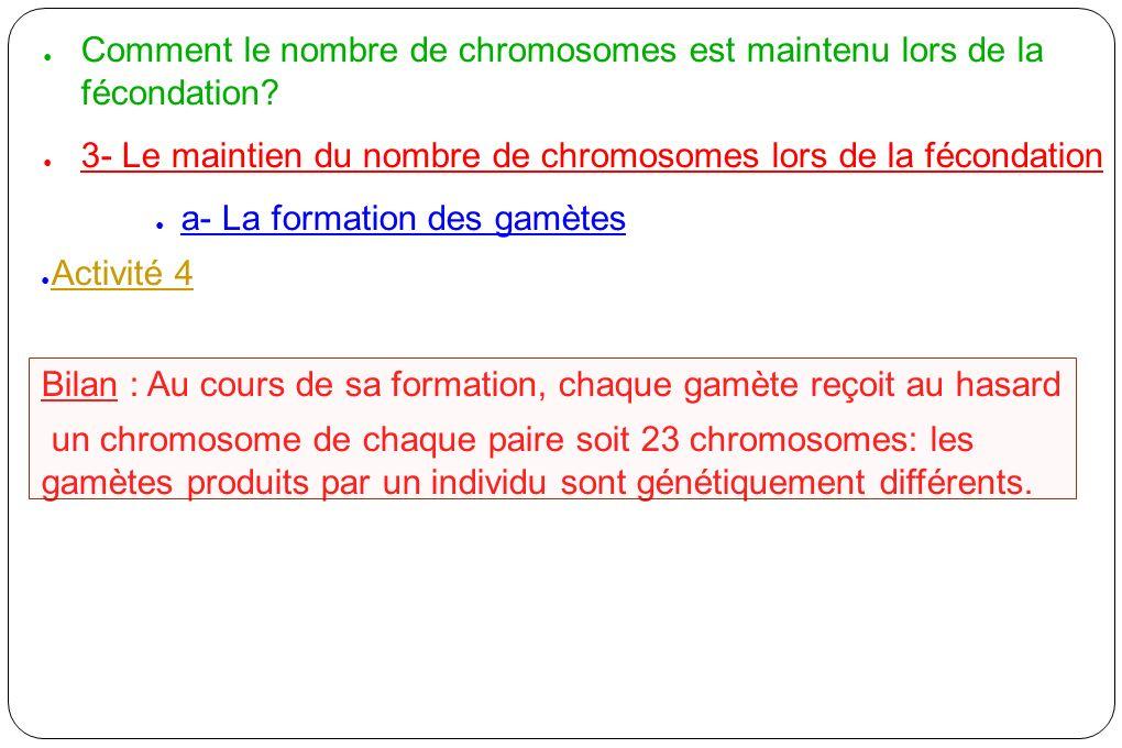 Comment le nombre de chromosomes est maintenu lors de la fécondation
