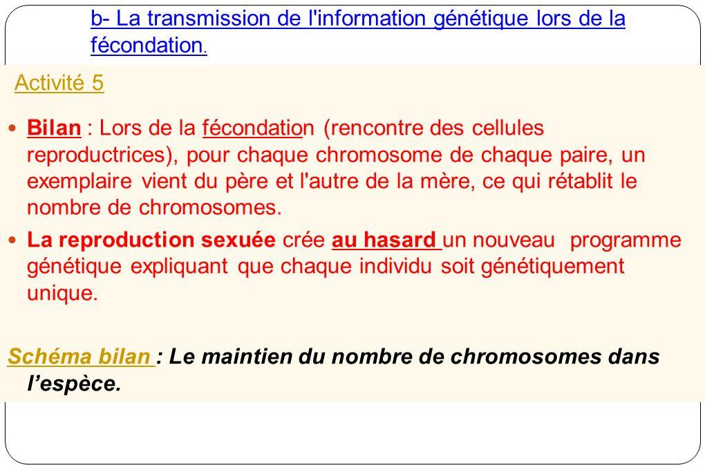 b- La transmission de l information génétique lors de la fécondation.