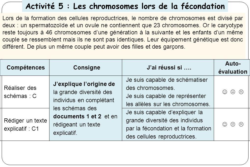 Activité 5 : Les chromosomes lors de la fécondation