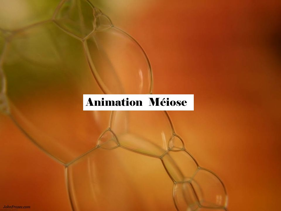 Animation Méiose Animation #1