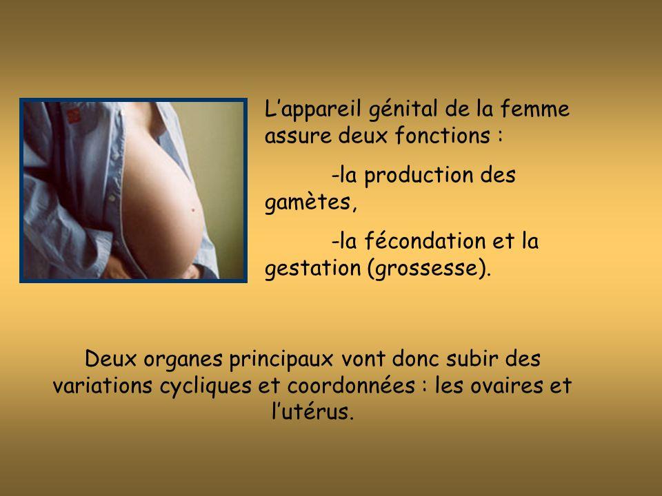 L'appareil génital de la femme assure deux fonctions :