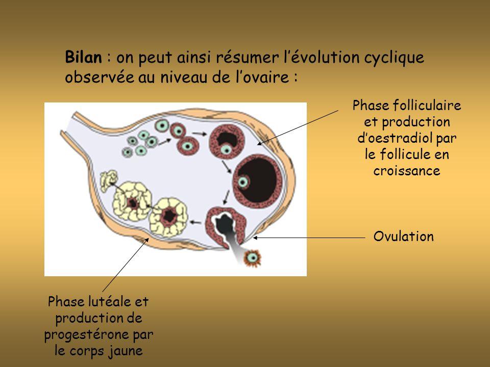 Phase lutéale et production de progestérone par le corps jaune